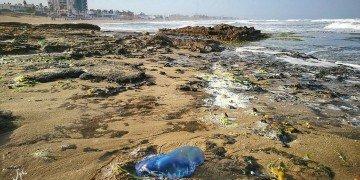 activa torrevieja ciudadanos medusas