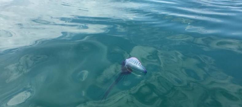activa pilar horadada carabela medusa