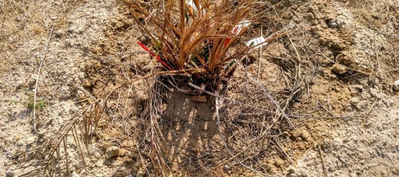activa orihuela palmetum