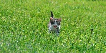 cat-1035932_1920