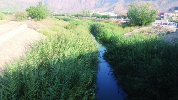 activa orihuela cauce rio Segura 2