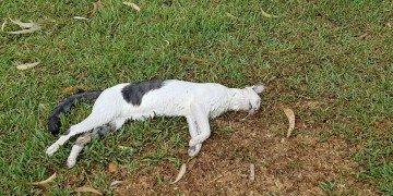 activa orihuela faoc gatos 2